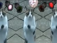 Funny Pets Cats Dogs Dancing Singing